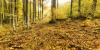 Twilight Rol (recien abierto) Th_map_bosque1_thumb